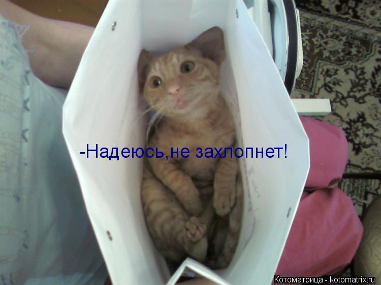 Котоматрица: -Надеюсь,не захлопнет!