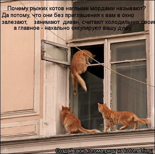 Котоматрица: Почему рыжих котов наглыми мордами называют?  Да потому, что они без приглашения к вам в окно залезают,    занимают  диван, считают холодильни