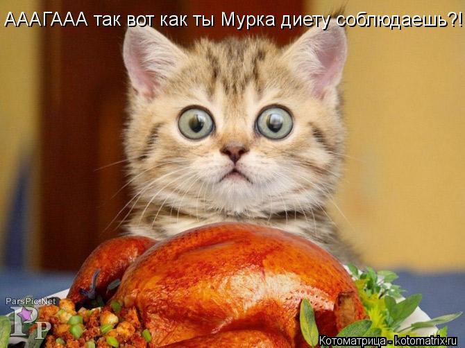 Котоматрица: АААГААА так вот как ты Мурка диету соблюдаешь?!