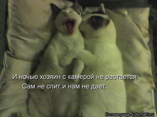 Котоматрица: И ночью хозяин с камерой не растаётся. Сам не спит и нам не дает.