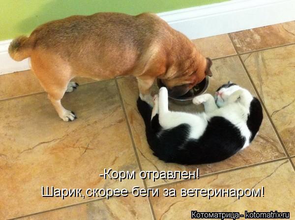Котоматрица: -Корм отравлен!  Шарик,скорее беги за ветеринаром!