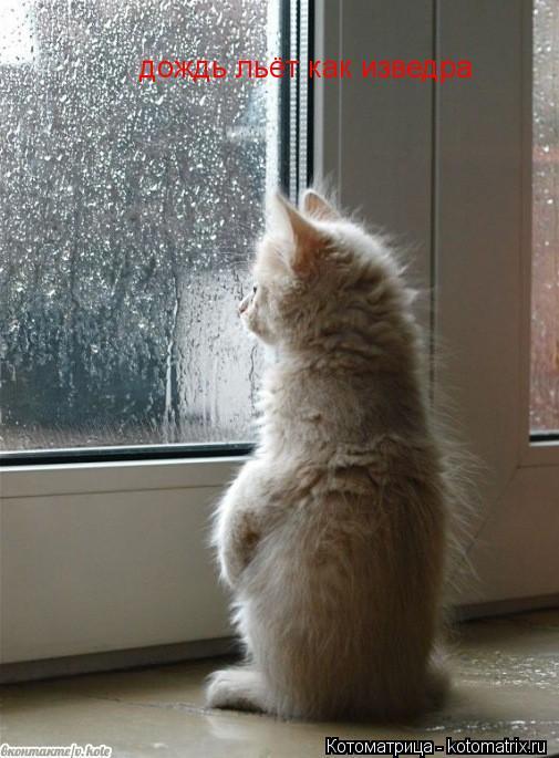Котоматрица: дождь льёт как изведра