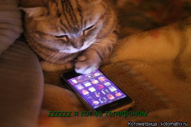 Котоматрица: zzzzzz я кот за телефоном