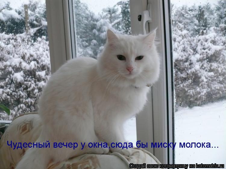Котоматрица: Чудесный вечер у окна,сюда бы миску молока...