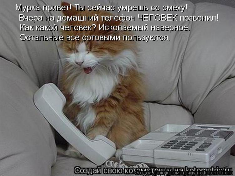 Хамка | ВКонтакте