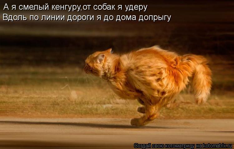 Котоматрица: А я смелый кенгуру,от собак я удеру Вдоль по линии дороги я до дома допрыгу