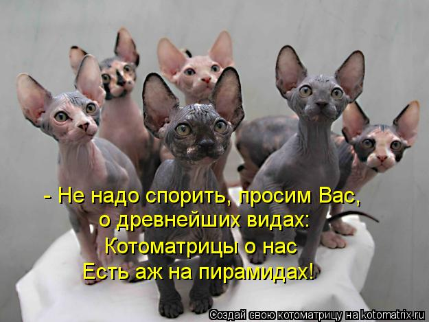 Котоматрица: - Не надо спорить, просим Вас,  о древнейших видах: Котоматрицы о нас  Есть аж на пирамидах!