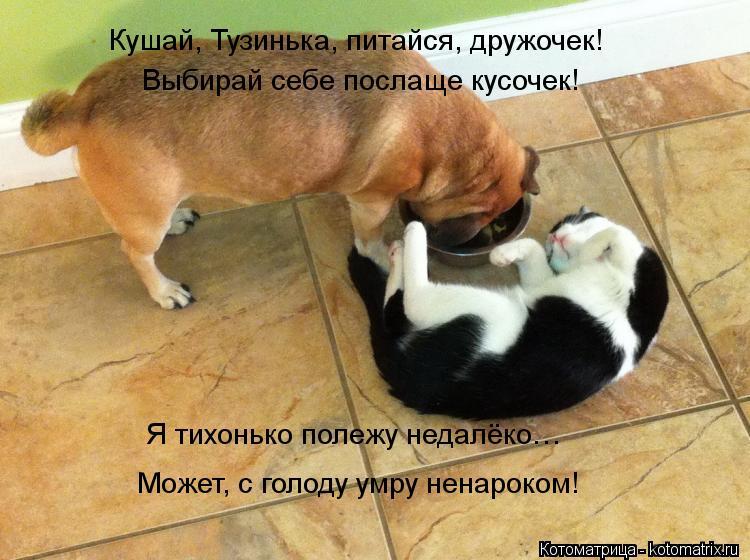 Котоматрица: Кушай, Тузинька, питайся, дружочек! Выбирай себе послаще кусочек! Я тихонько полежу недалёко… Может, с голоду умру ненароком!