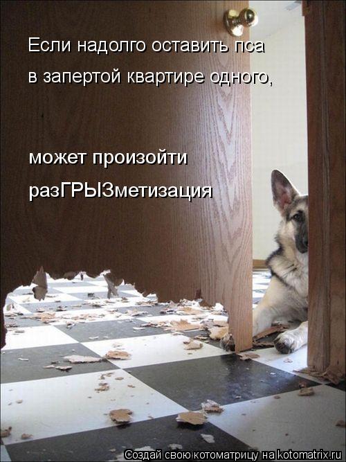 Котоматрица: Если надолго оставить пса может произойти разГРЫЗметизация в запертой квартире одного,