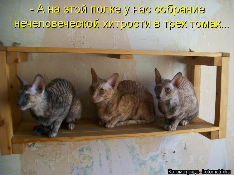 Котоматрица: - А на этой полке у нас собрание  нечеловеческой хитрости в трех томах...