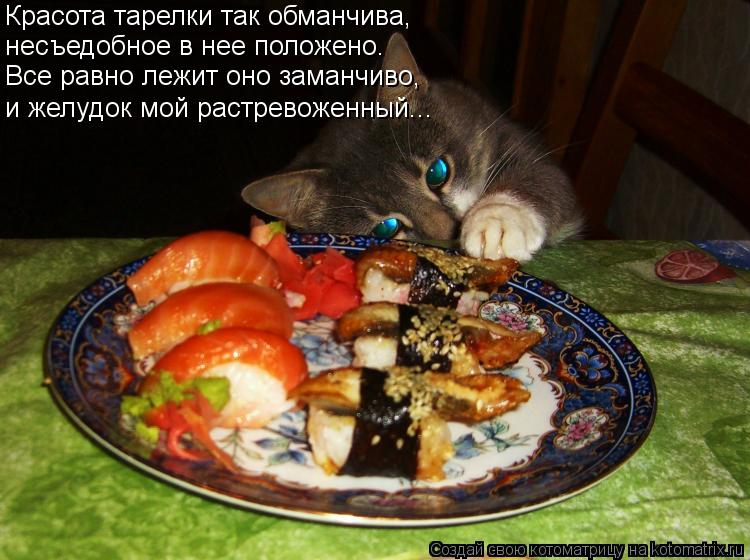 Котоматрица: Красота тарелки так обманчива, несъедобное в нее положено. и желудок мой растревоженный... Все равно лежит оно заманчиво,