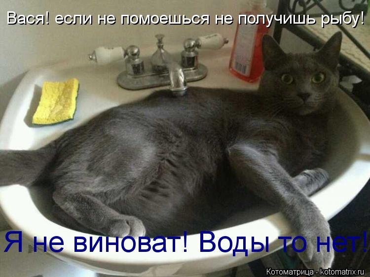 Котоматрица: Вася! если не помоешься не получишь рыбу! Я не виноват! Воды то нет!