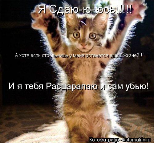 Котоматрица: Я Сдаю-ю-юсь!!!!! И я тебя Расцарапаю и сам убью! А хотя если стрельнишь у меня останется ещё 8 жизней!!!
