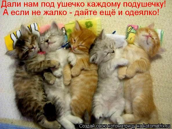 Котоматрица: Дали нам под ушечко каждому подушечку! А если не жалко - дайте ещё и одеялко!