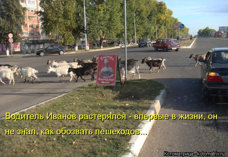Котоматрица: Водитель Иванов растерялся - впервые в жизни, он не знал, как обозвать пешеходов...