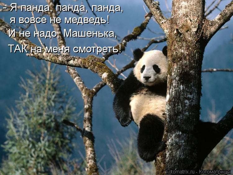 Котоматрица: - Я панда, панда, панда, я вовсе не медведь! И не надо, Машенька, ТАК на меня смотреть!