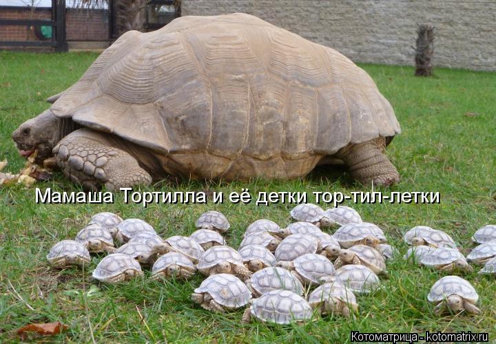 Котоматрица: Мамаша Тортилла и её детки тор-тил-летки