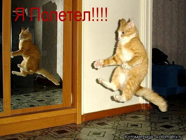 Котоматрица: Я Полетел!!!!