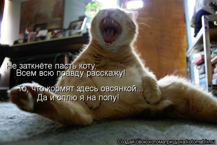Котоматрица: Не заткнёте пасть коту, Всем всю правду расскажу! То, что кормят здесь овсянкой... Да и сплю я на полу!