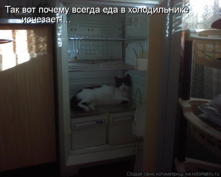Котоматрица: Так вот почему всегда еда в холодильнике исчезает!...