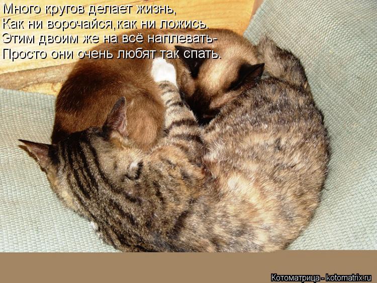 Котоматрица: Много кругов делает жизнь, Как ни ворочайся,как ни ложись. Этим двоим же на всё наплевать- Просто они очень любят так спать.