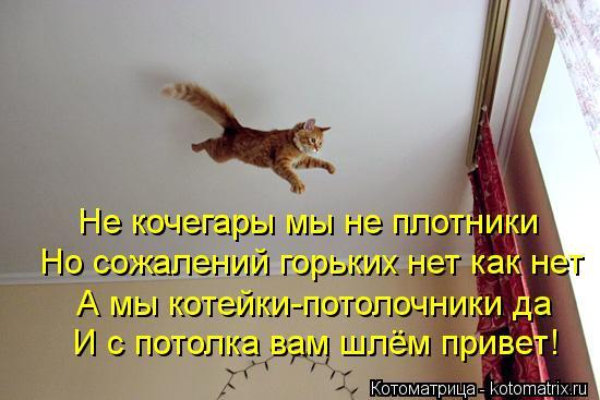 Котоматрица: Не кочегары мы не плотники Но сожалений горьких нет как нет А мы котейки-потолочники да И с потолка вам шлём привет!