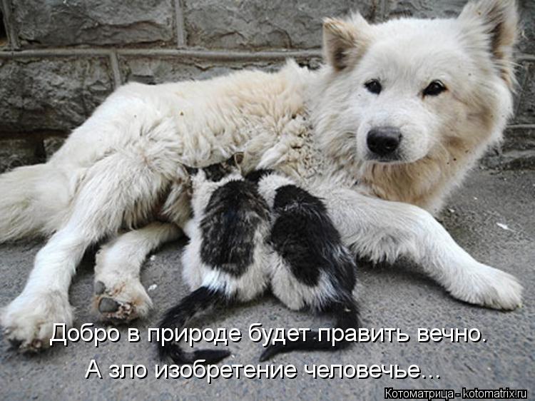 Котоматрица: Добро в природе будет править вечно. А зло изобретение человечье...