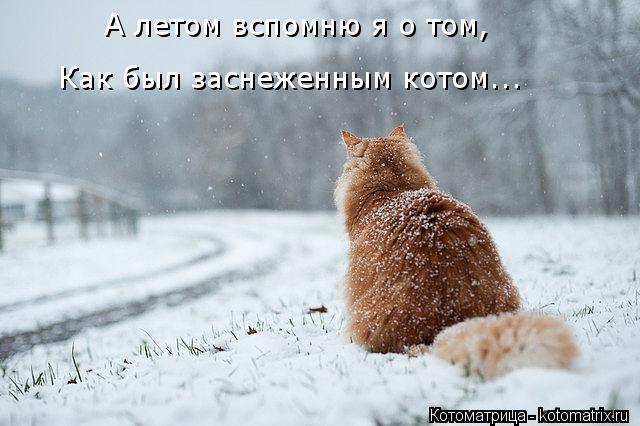 Котоматрица: А летом вспомню я о том, Как был заснеженным котом...
