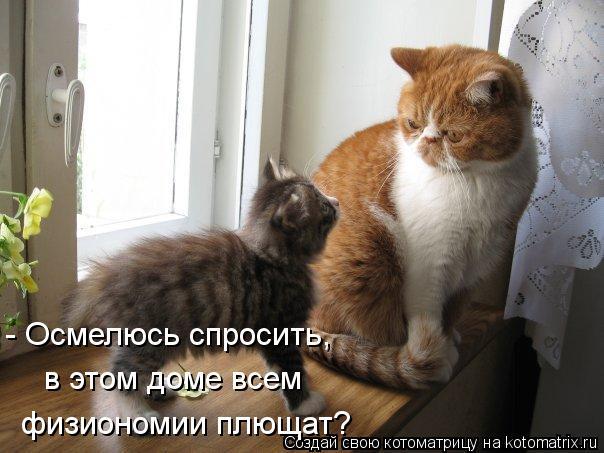Котоматрица: - Осмелюсь спросить,  в этом доме всем физиономии плющат?