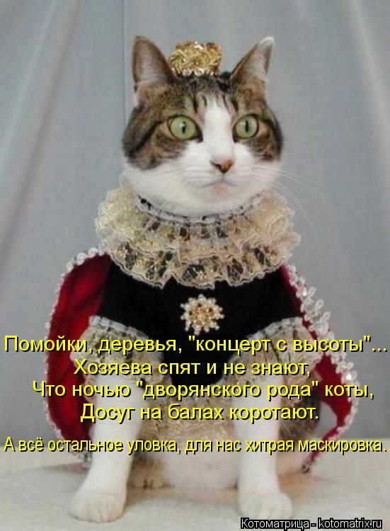 """Котоматрица: Помойки, деревья, """"концерт с высоты""""... Хозяева спят и не знают, Что ночью """"дворянского рода"""" коты, Досуг на балах коротают. А всё остальное уло"""