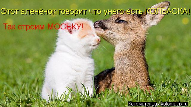 Котоматрица: Этот аленёнок говорит что унего есть КОЛБАСКА! Так строим МОСЬКУ!