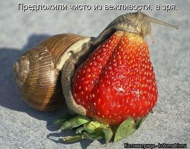 http://kotomatrix.ru/images/lolz/2013/04/16/kotomatritsa_8D.jpg