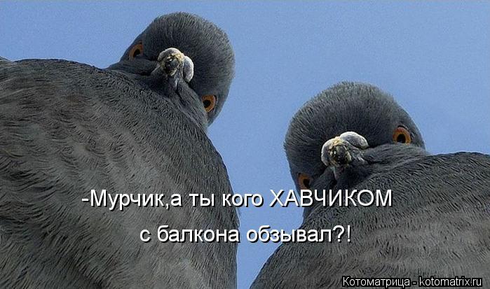 Котоматрица: -Мурчик,а ты кого ХАВЧИКОМ с балкона обзывал?!