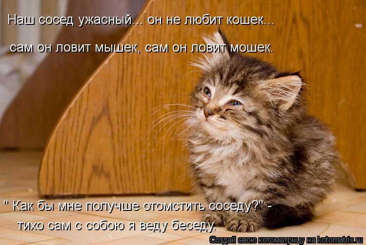 """Котоматрица: Наш сосед ужасный... он не любит кошек... """" Как бы мне получше отомстить соседу?"""" - тихо сам с собою я веду беседу. сам он ловит мышек, сам он лови"""