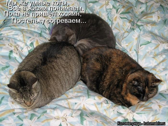 Котоматрица: Мы же умные коты, Всё в жизни понимаем. Пока не пришёл хозяин, Постельку согреваем...