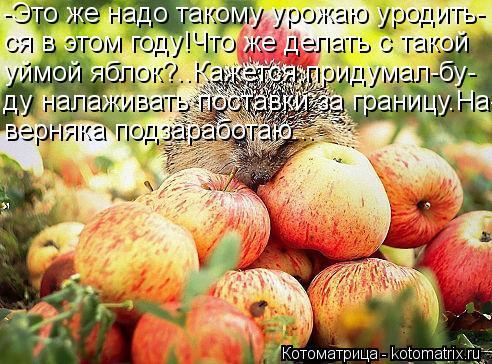 Котоматрица: -Это же надо такому урожаю уродить- ся в этом году!Что же делать с такой уймой яблок?..Кажется,придумал-бу- ду налаживать поставки за границу.