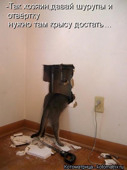 Котоматрица: -Так хозяин,давай шурупы и  отвёртку нужно там крысу достать ...