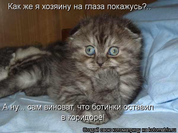 Котоматрица: Как же я хозяину на глаза покажусь?.. А ну... сам виноват, что ботинки оставил в коридоре!