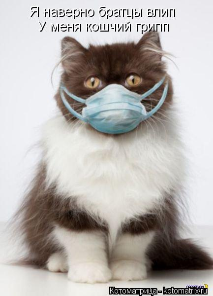 Котоматрица: Я наверно братцы влип У меня кошчий грипп
