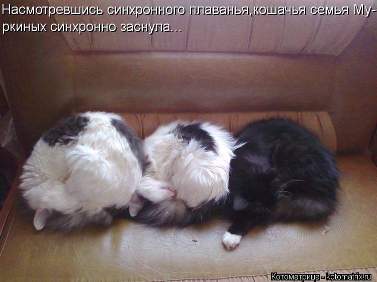 Котоматрица: Насмотревшись синхронного плаванья,кошачья семья Му- ркиных синхронно заснула...
