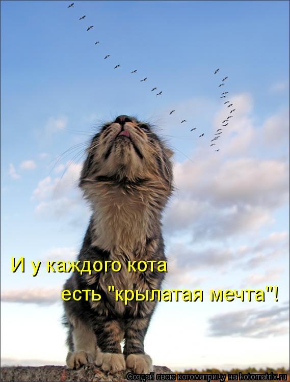 """Котоматрица: И у каждого кота есть """"крылатая мечта""""!"""