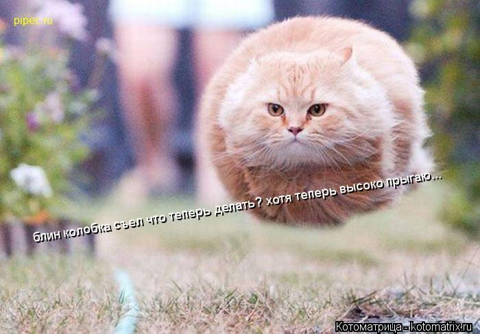 Котоматрица: блин колобка съел что теперь делать? хотя теперь высоко прыгаю...