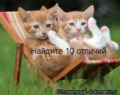 Котоматрица: Найдите 10 отличий