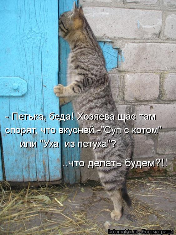 """Котоматрица: - Петька, беда! Хозяева щас там спорят, что вкусней -""""Суп с котом"""" или """"Уха  из петуха""""? ..что делать будем?!!"""
