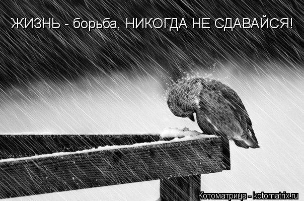 Котоматрица: ЖИЗНЬ - борьба, НИКОГДА НЕ СДАВАЙСЯ!