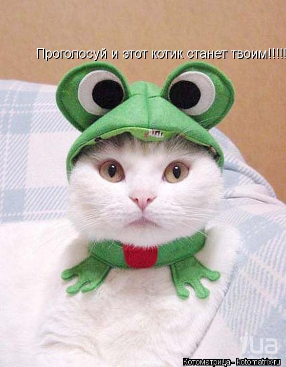 Котоматрица: Проголосуй и этот котик станет твоим!!!!!!