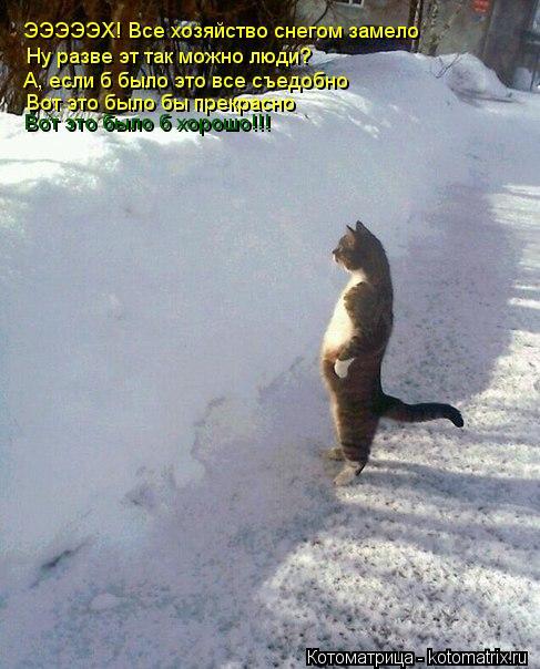 Котоматрица: ЭЭЭЭЭХ! Все хозяйство снегом замело Ну разве эт так можно люди? А, если б было это все съедобно  Вот это было бы прекрасно Вот это было б хорош