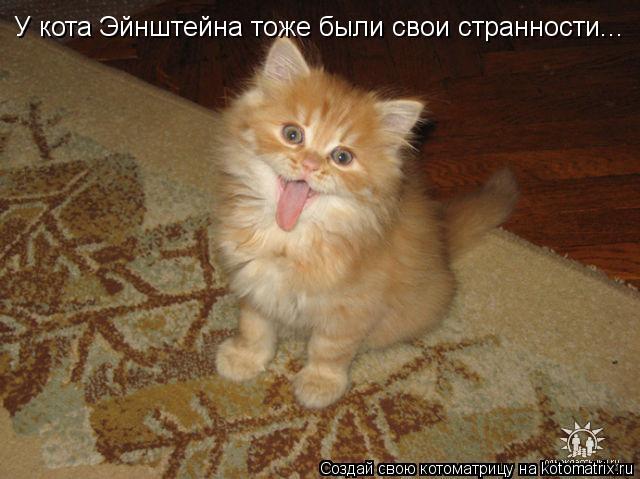 Котоматрица: У кота Эйнштейна тоже были свои странности...