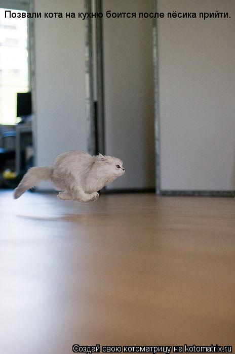 Котоматрица: Позвали кота на кухню боится после пёсика прийти.