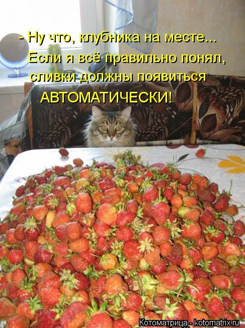 Котоматрица: - Ну что, клубника на месте... Если я всё правильно понял, сливки должны появиться АВТОМАТИЧЕСКИ!